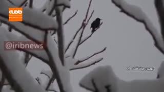 بارش برف بهاری در بویین میاندشت اصفهان