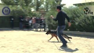 داگ شو بهترین ژرمن سگ های کار ایران
