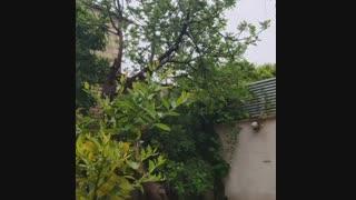 بهار شیراز 99.01.10