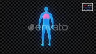 مجموعه فوتیج ویروس و عفونت Virus Infection Medical Body