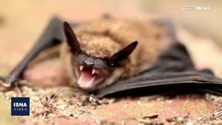 از دلایل تفاوت نرخ مرگومیر کرونا تا بررسی رفتار اجتماعی خفاشها