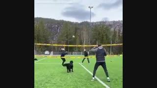 سگ والیبالیست