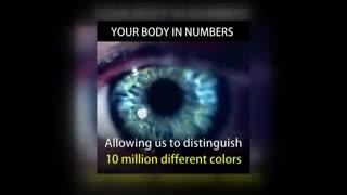 بدن انسان به بیان اعداد